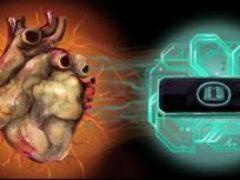 «Сердце-на-чипе» научили сокращаться по-человечески