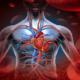 Как улучшить сердечное кровоснабжение