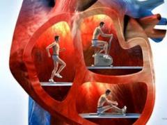 Физические нагрузки на сердце: какого типа и как много