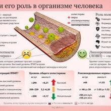 Уровень холестерина вашего организма